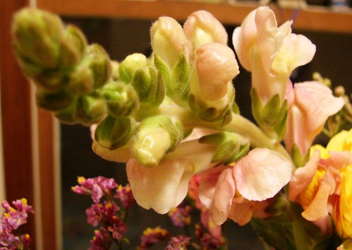 37/365 Magi Flowers