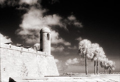 Watchtower and Palms (Jamie Powell Sheppard) Tags: blackandwhite bw art film architecture palms ir photo florida nps fort 17thcentury fineart masonry bastion canonae1program staugustine sepiatone watchtower cannons stardesign coquina 50mmlens 35mmslr femalephotographer hc110dilb woodeffect castillodesanmarcosnationalmonument filmwins jamiepowellsheppard 29darkredfilter kodakhiebwinfrared keepted subthiaps believeinfilm