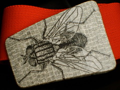 fly buckle/belt (lulu.voodoo.) Tags: collage insect fly belt handmade chinese recycle buckle