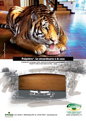 Campagna Pubblicitaria TIGRE
