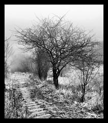 A world in B&W (Kirsten M Lentoft) Tags: bw mist tree denmark steps aplusphoto overtheexcellence maglesø betterthangood magicdonkeysbest kirstenmlentoft wanderinggypsies magicunicornverybest