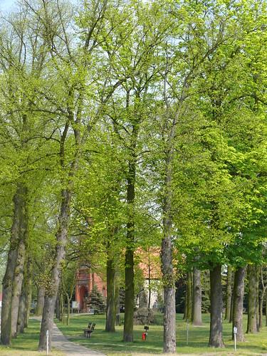 Dorfaue: Frühling