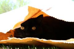 The cat in the sack (biedk) Tags: cat denmark kat sack danmark mille youmademyday sk katteniskken abigfave bestofcats
