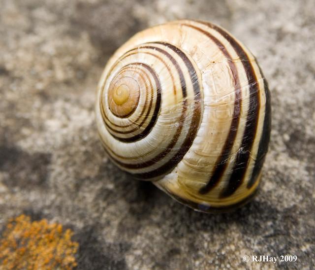 Ground Snail along Bruce Trail