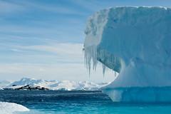 Ice Berg Blue