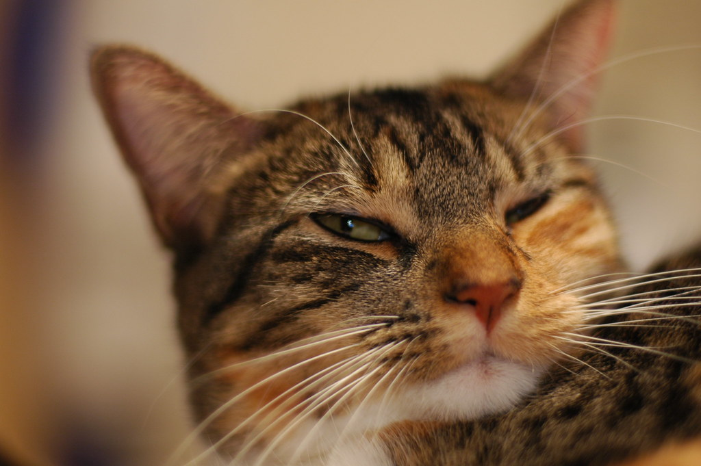 Kiwi的表情 - 艾小柯 - 流浪者的乡愁