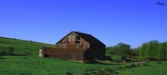 Granja oxidada y al olvido /  Rusty and forgotten farm (Anziaz) Tags: sky ontario canada verde green rust farm country paisaje cielo campo lanscape granja oxidado colorphotoaward anziaz
