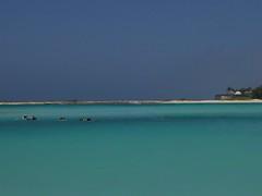 Baby Beach - Aruba (ericfranklin) Tags: ocean cactus beach water cacti bluewater aruba naturalbridge palmtrees iguana caribbean tiki whitesand beachsunset oranjestad babybeach eaglebeach iphotorating0