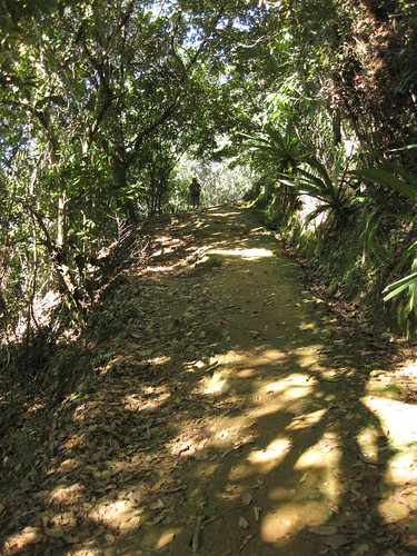jungle trail, Ilha Grande