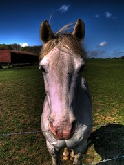 Horsey HDR