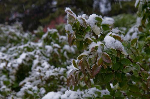 La neige ré-étend son manteau blanc
