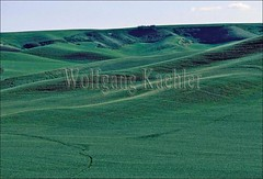 00009106 (wolfgangkaehler) Tags: usa field grass landscape landscapes washington farm wheat farming grain farmland pacificnorthwest fields northamerica farms grasses grains agriculture washingtonstate wheatfields palouse wheatfield easternwashington palousecountry