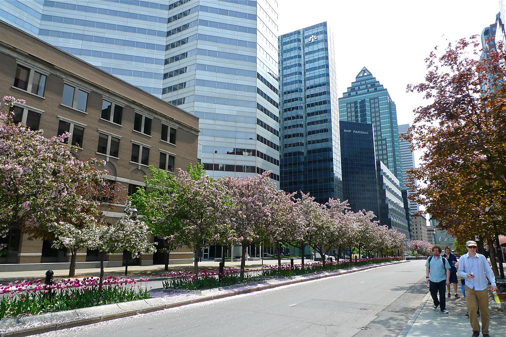 Copyright Photo: McGill College Avenue by Montreal Photo Daily, on Flickr