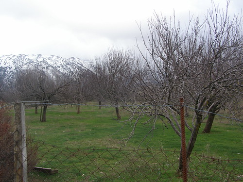 apple trees omalos hania chania
