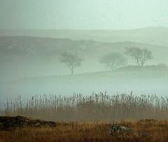 Mist (Dan Baillie) Tags: mist fog landscape scotland nikon fields moors portfolio galloway dumfriesandgalloway puddock wigtownshire danbaillie bailliephotographycouk bailliephotography wigtownshirephotographer dumfriesandgallowayphotography