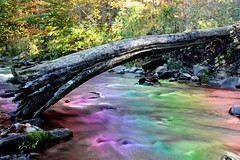 Multi color water (jessestaunch) Tags: wood pink blue autumn red orange color tree green fall water yellow creek photoshop canon rebel moving log stream slow purple tripod filter adobe shutter polarized tool multi circular xsi iphone gradiant flickup