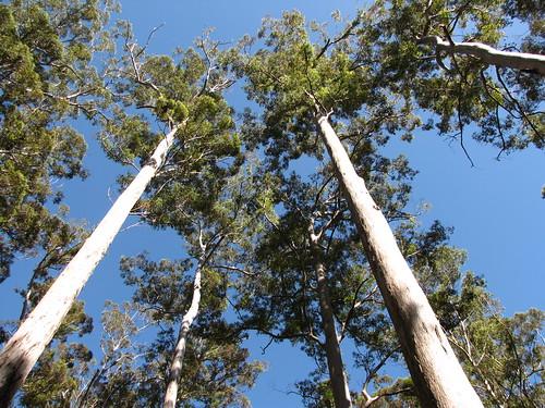 Forêt de Karris
