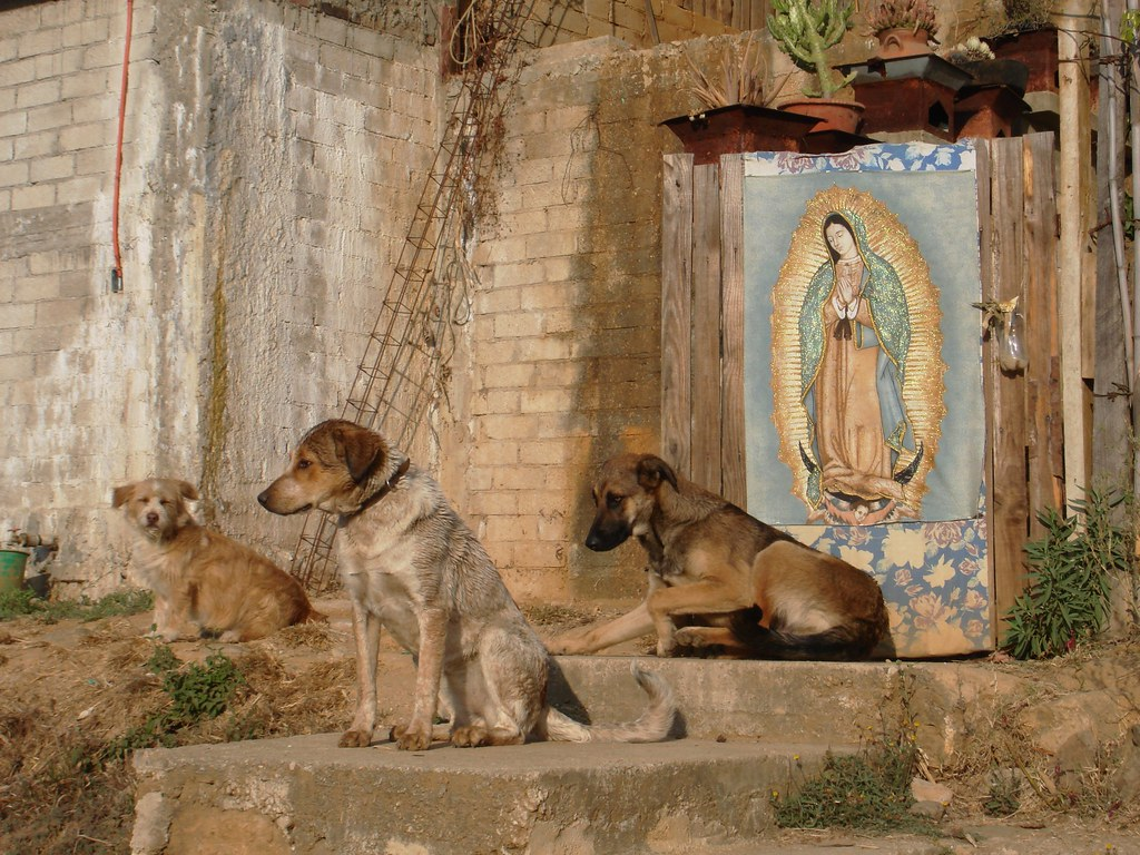 Dogs and Virgin, San Felipe del Agua, Oaxaca