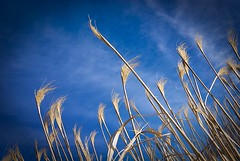 In the wind (Insight Imaging: John A Ryan Photography) Tags: toronto ontario aficionados pentaxk10d justpentax wwwinsightimagingca johnaryanphotography