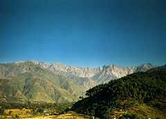 Dhauladhar mountain range view from Palampur side (Triund Baba ) Tags: trees green nature pine temple air peaceful bamboo clean himachalpradesh palampur topshots lohna worldwidelandscapes mightymountains natureselegantshots panoramafotogrfico dhauladhardharamsala savebeautifulearth grainfieds holtacamp newgul picasa3google fuijifilms