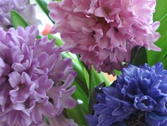 Hyacinth Detail (such pretty things) Tags: pink flowers home floral spring purple country cottage fresh vase arrangement hyacinth