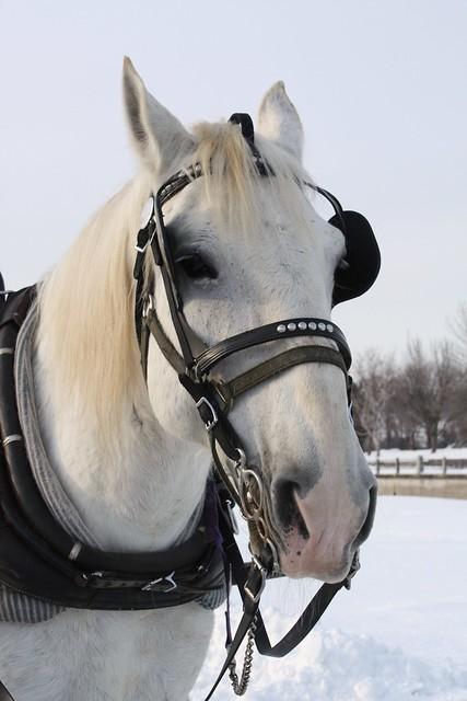 2009-02-21  Winterlude 122