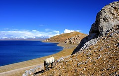 Horse View on Nam tso (reurinkjan) Tags: horse nature tibet 2008 changtang namtsochukmo tibetanlandscape storytellingphoto tengrinor janreurink damshungcounty storytellingphotography damgzung tashidorgompa      photostorydrapardrung