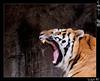 Yawn (Lugh Ri) Tags: fab italy rome roma canon zoo italia tiger yawn soe tigre sbadiglio lazio supershot bioparco ruggito bej abigfave platinumphoto theunforgettablepictures overtheexcellence theperfectphotographer lughri lucapascoletti rubyphotographer maledettospleen alwaysexc