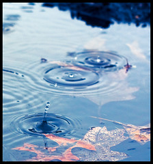 Raindrops (Pat Kilkenny) Tags: blue water colors leaves rain canon puddle raindrops splash canon40d patkilkenny