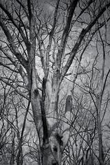 Allerton_Park-55 (chaunceydavis818) Tags: canon eos spring ben il universityofillinois shad uofi allertonpark centralillinois 40d sundayshoot