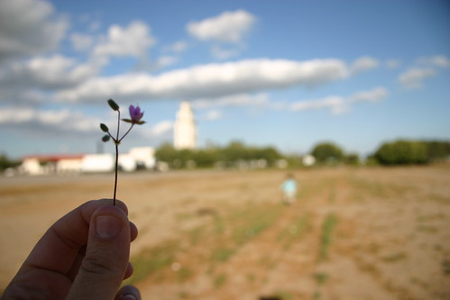 wildflower & tower