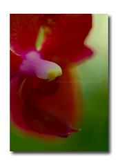 St. Paul, Como Conservatory-Marjorie McNealy Sunken Garden (Marina Castillo) Tags: flowers flores minnesota stpaul comoconservatory flickrcom marinacastillo marjoriemcnealysunkengarden
