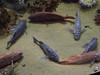 20090422 Bottom of Aquarium