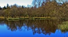 glenmoss april 2009 2 (alybong) Tags: wood trees wild reflection water woodland reflections scotland countryside view kilmacolm blueribbonwinner otw theperfectphotographer goldstaraward