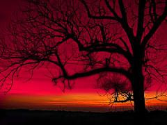354 Red Sunset-Bourgogne