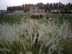 صورة0033 (lateefkuwait) Tags: في تاريخ المزرعة 452009