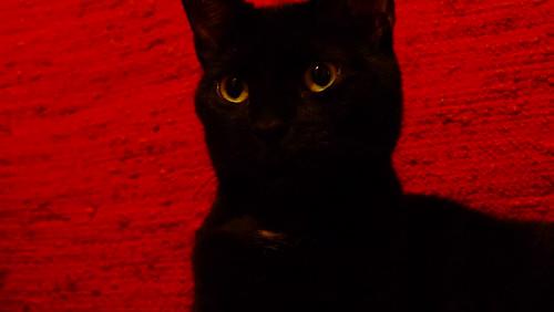 the same cat