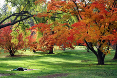 Anyone for a picnic? (Pink Thistle) Tags: autumn scenery picnic peace canberra perfection greengrass yarralumla
