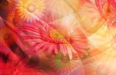 2933 Florales (Supply Impresin Digital) Tags: flowers flores beautiful rose deco rosas lindas follaje margaritas girasol supply lilas motivos florales supplydeco