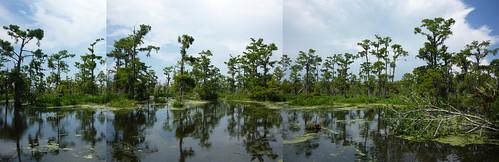 swamp stitch
