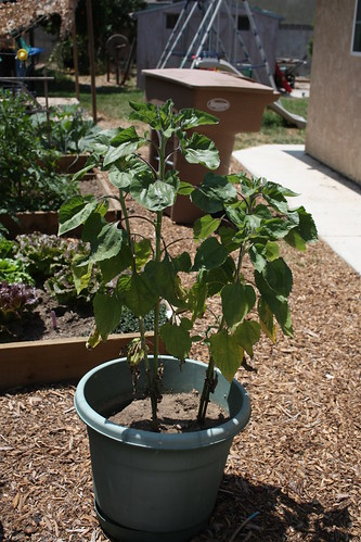 Garden progress May 018.JPG