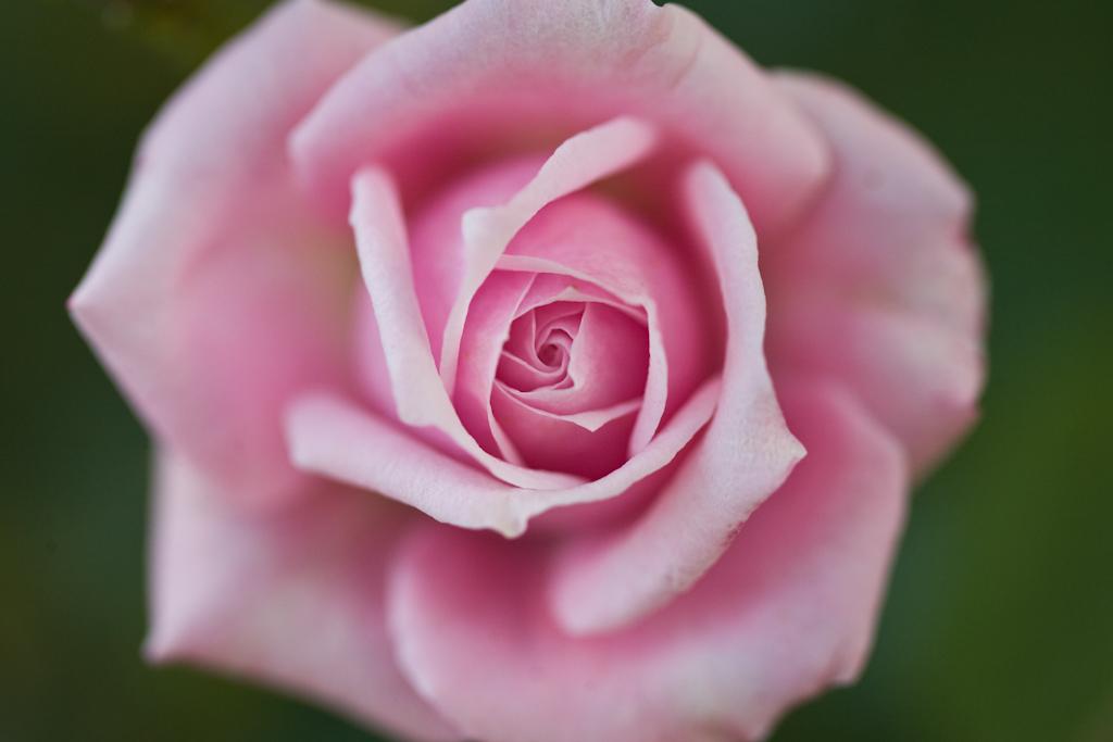 IMAGE: http://farm4.static.flickr.com/3314/3583481580_765954fc2b_o.jpg