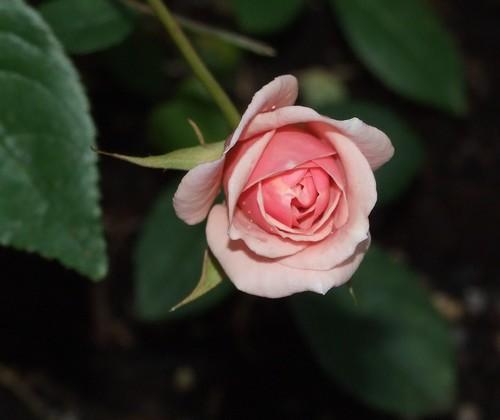 prova fiori 001