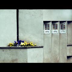 PENSIERI DI CEMENTO (Elena Fedeli) Tags: italy rome roma concrete italia cemento casaletto citofoni buildingentrace entratedipalazzi pansvioledelpensiero