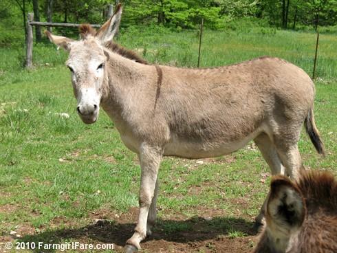 Donkey Rolls 6