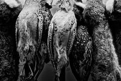 Carroña de Mercado // Market Carrion (Alejandro Dagnino J.) Tags: blackandwhite bw rabbit byn blancoynegro animal animals fur death market conejo feathers bn muerte mercado deadanimal animales fowl carrion plumas carroña 1on1bwphotooftheweek unlimitedphotos 1on1bwphotooftheweekmay2010