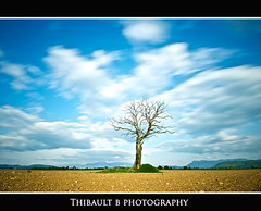Alone... I (Thibault B Photography) Tags: longexposure blue wild sky france tree green nature grass rock photoshop grenoble landscape vent aperture nikon focus long exposure raw wind tripod champs sigma vert bleu ciel filter saturation terre paysage arbre vue herbe density manfrotto hoya filtre neutral bl sigma1020mm 10mm longue nd400 rives isre longuepose trepied lensfilter neutraldensityfilter manfrotto190xprob hoyand400 d300s nikond300s