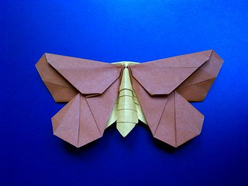 LaFosse's Moth
