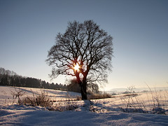 Cold winter day (RainerSchuetz) Tags: blue winter white snow cold tree landscape oak frost scenic bluesky winterwonderland gegenlicht winterlandscape eiche winterlandschaft naturesfinest blueribbonwinner winterdream gegenlichtaufnahme abigfave anawesomeshot beautyofwinter goldstaraward
