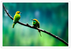 Please suggest a title... :) (Yug_and_her) Tags: life morning india tree birds nikon branch dof cloudy hyderabad incredible jubileehills beeeater greenbeeeater lotuspond littlegreenbeeeater 18200vr d80